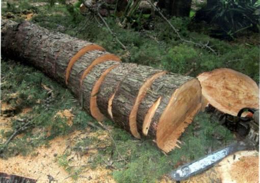 abattage arbre