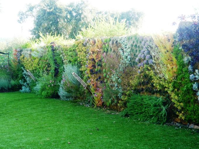 Clôture végétale et haies - Bricolage maison