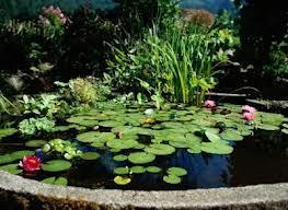Nettoyage du bassin de votre jardin astuces bricolage - Nettoyage du jardin ...
