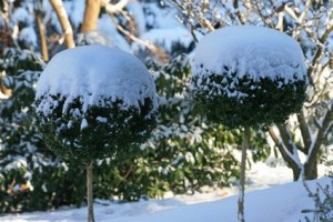 protection plante hiver