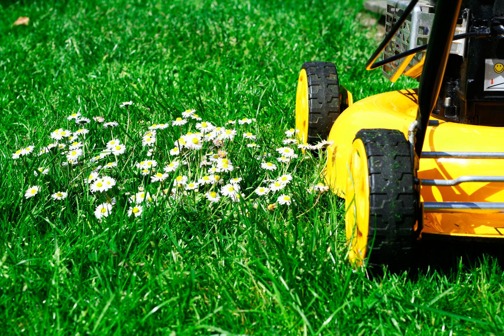 jardinage  les outils de taille