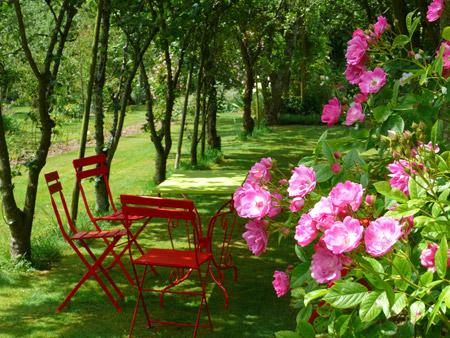 Les rosiers pour un jardin romantique astuces bricolage - Astuce bricolage jardin ...
