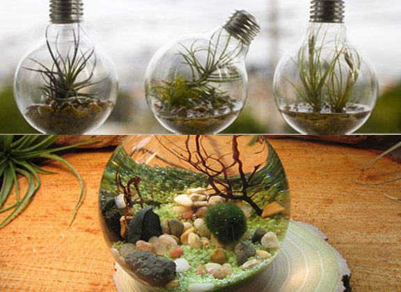 Transformer une ampoule en aquarium astuces bricolage for Petit aquarium boule