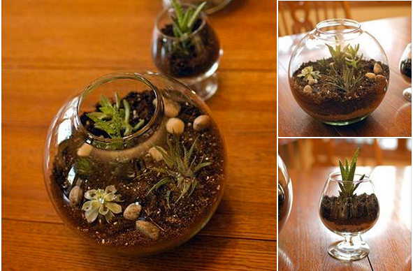 voici comment faire pour cr er un joli terrarium astuces bricolage. Black Bedroom Furniture Sets. Home Design Ideas