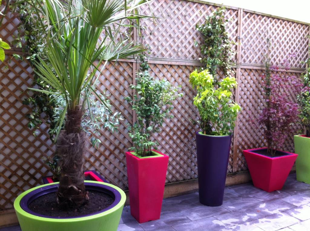 plante pot terrasse palmier en pot pour terrasse bac. Black Bedroom Furniture Sets. Home Design Ideas