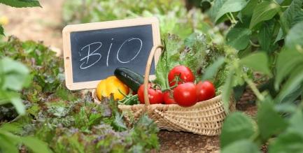 Comment lutter contre les maladies au jardin avec les - Lutter contre les fourmis au jardin ...