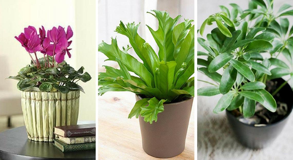 plante detoxifiante chambre peritoneal cancer bowel