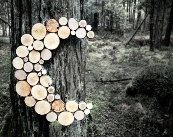 branches d'arbre