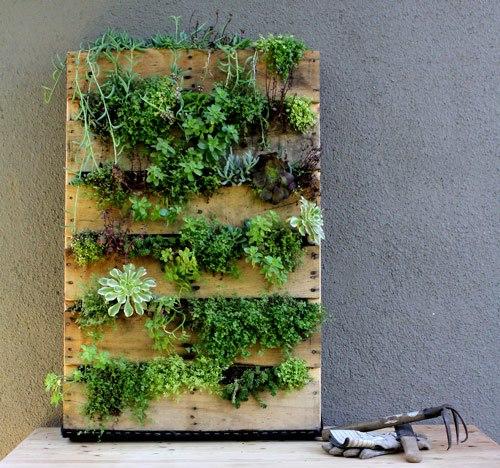 Gagner de l 39 espace plantes suspendues astuces bricolage for Plante a suspendre exterieur