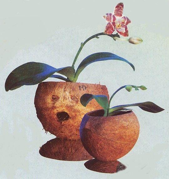 Decoration Aquarium Noix De Coco : Des idées de récupération la coquille noix coco