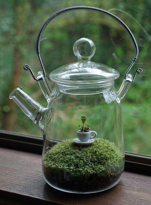 Cr Er Des Terrariums Avec Des Objets R Cup R S Astuces