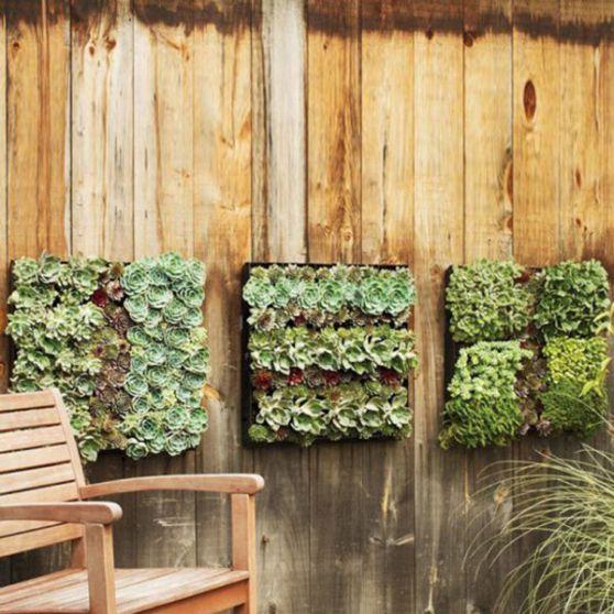 jardin-vertical-plantes-succulentes