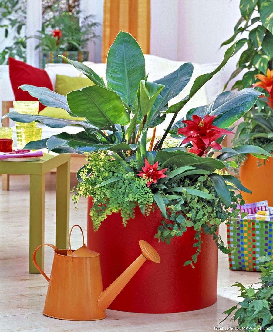 Tout Savoir Sur Vos Plantes D 39 Int Rieur Astuces Bricolage