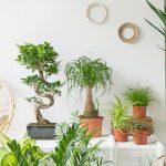 Tout savoir sur vos plantes d'intérieur!