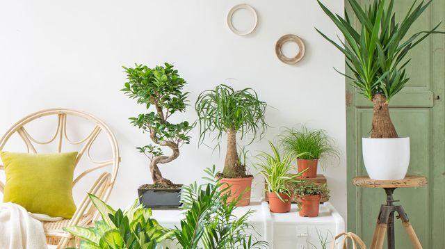 tout savoir sur vos plantes d 39 int rieur astuces bricolage. Black Bedroom Furniture Sets. Home Design Ideas