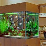 Collection époustouflante d'aquariums originaux!