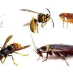 Desinsectctisation : démarches et normes des luttes anti insectes