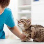 Lutte anti puce : traitements pour éliminer les puces chez chiens et chats