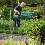 Les bonnes pratiques pour l'arrosage e votre jardin