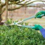 Préparer son jardin pour l'automne