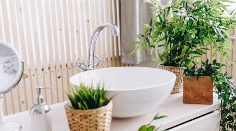 choisir plante salle bain