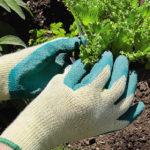 Porter des gants de jardinage pour un max de protection