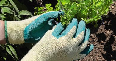 choix gants jardinage