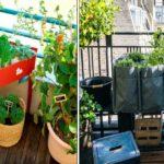 Potager au balcon : conseils pour la plantation et l'entretien