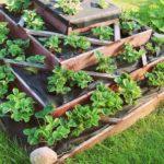 Démarrer un potager : choix et disposition des plantes
