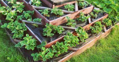 choix plante potager