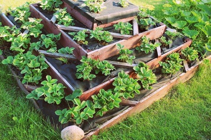 choix plantes potager