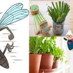 Les meilleures méthodes naturelles pour se protéger des moustiques