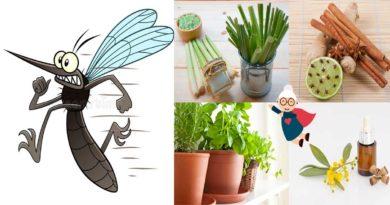 eloigner moustique naturellement