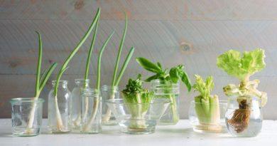 multiplication végétale drestes