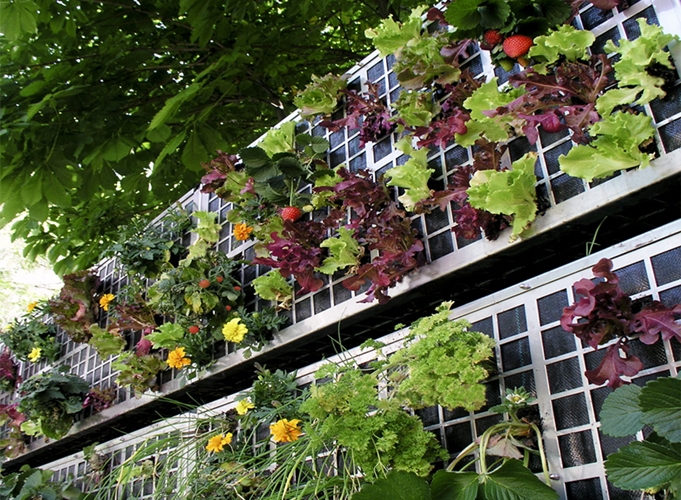potager mur végétal