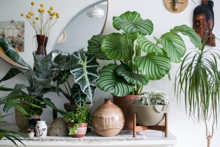 lumiere plante interieur