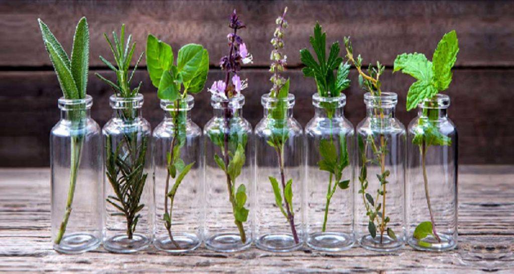 plantes sans terre