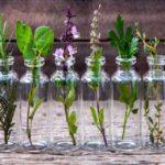 10 plantes à faire pousser dans une bouteille d'eau