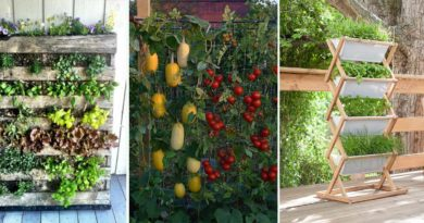 idee potager vertical
