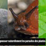 Repousser naturellement les parasites de votre potager /  jardin