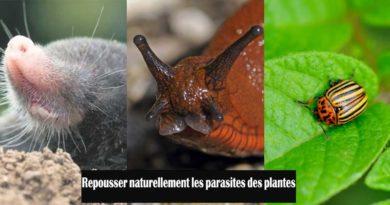 repousser parasites plantes