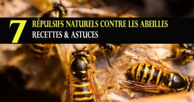 repulsif naturel abeille