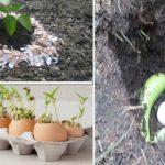8 bonnes astuces d'utilisation de coquille d'œufs pour le jardin  à découvrir !