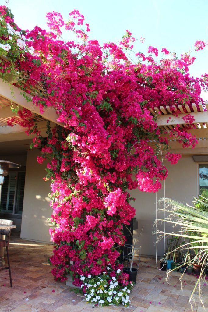 deco pergola avec fleurs