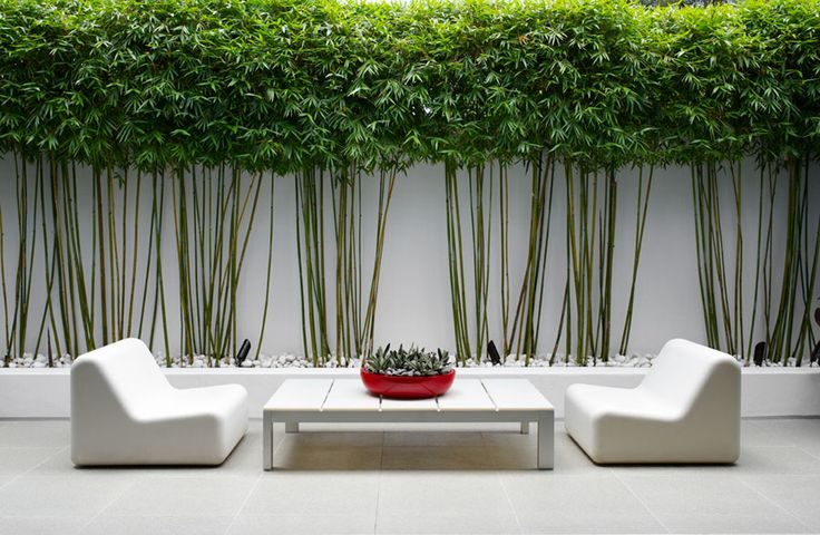 haie bamboo
