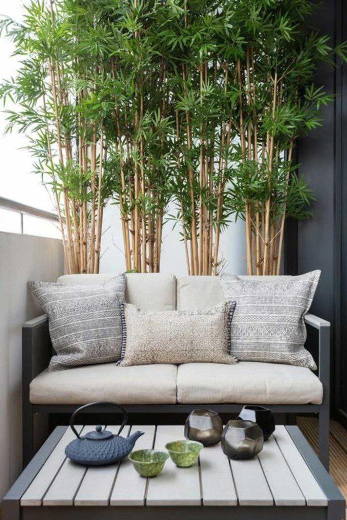 bambou balocn