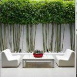 Mettre en terre et entretenir un bambou, une plante exotique