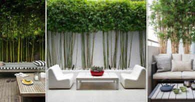 plantation bambou