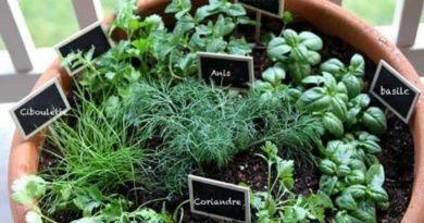 plante medicinale pot