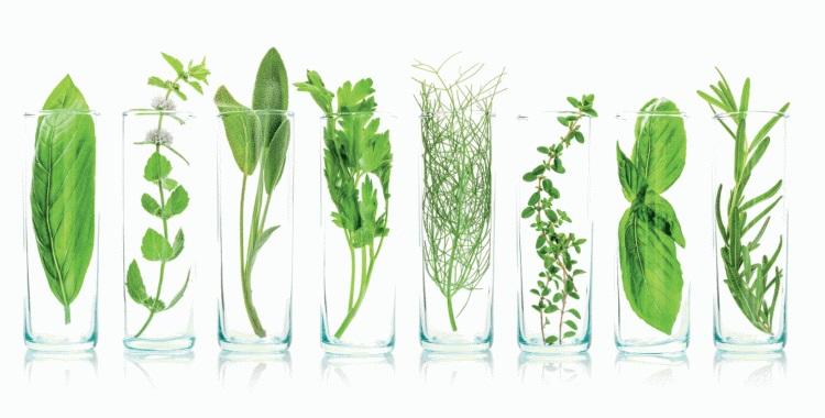 plante tisane